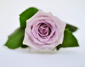 5 floral stock photos
