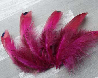 Set of 50 colorful fuchsia royal pheasant feathers