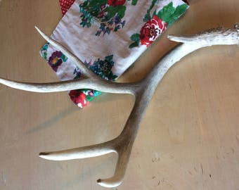 Naturally Shed Mule Deer Antler