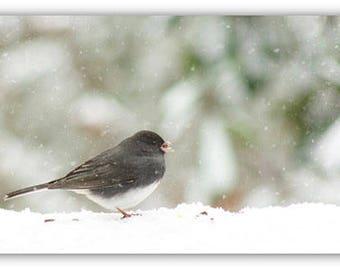 Dark-Eyed Junco Snow Fall