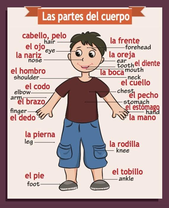 Spanish/English Classroom Poster Body Parts