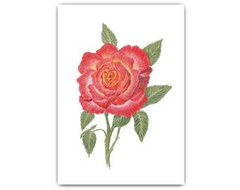 Printable Art, Rose Print, Pencil Drawing, Instant Download