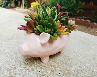 Cute porky pink planter loaded with living succulent arrangement