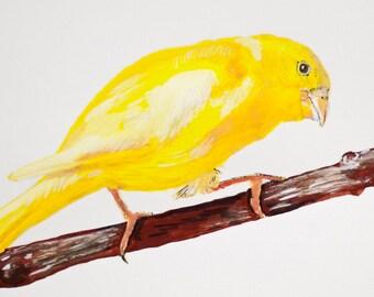Custom Bird Portrait - Painting of Bird - Unique Gift for Bird Lover - Pet Memorial - Pet Loss - Memorial Gift Idea - 9x12 inch