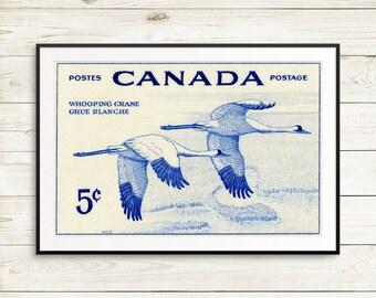 P130 Whooping crane, whooping crane art, whooping crane print, whooping crane poster, ornithology, ornithologist, Canada whooping crane