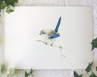 A5 Female Blue Wren