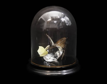 Butterfly and diamond display