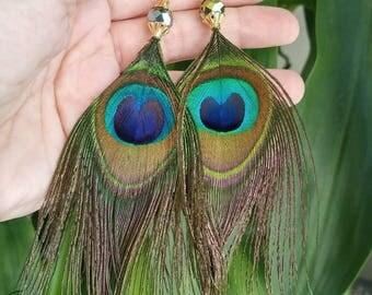 Peacock feather goldtone earrings with shiny aurora borealis bead.