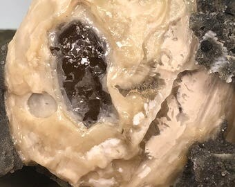 Fossilized Clam With Golden Honey Calcite Specimen - Natural Gemstone - #C17