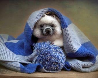 Needle felted hedgehog Felting Animal wool hedgehog HandmadeHedgehog toy hedgehog