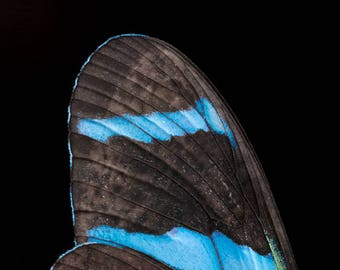 Blue Butterfly Wing Photo