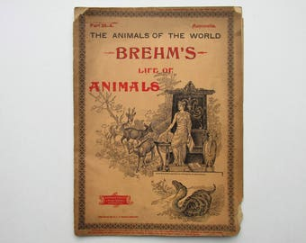 Antique 1896 Brehm's Life of Animals, Part 35-A, Illustrated, 1890's Booklet, Marquis & Company, The Cloven-Hoofed Animals, The Whales