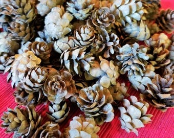 Small Hemlock Pine Cones, Natural Pine cones, Home or Wedding Decor, Fall or Winter Decorations, Crafts Wreaths Ornaments Potpourri
