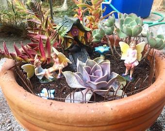 Succulent Fairy Potted Plant