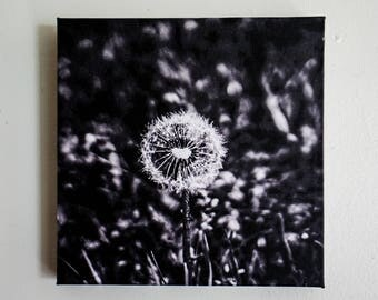 "8x8 Inch Canvas Wrap Of ""Brittle Hearts"" Dandelion Photograph, Wall Decor, Art"