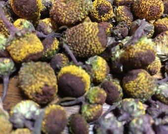 Spilanthes Tincture, Toothache plant organic Acmella oleracea herb