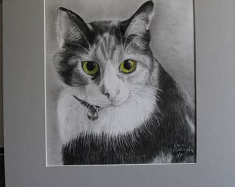 Graphite and colored pencil Cat drawing