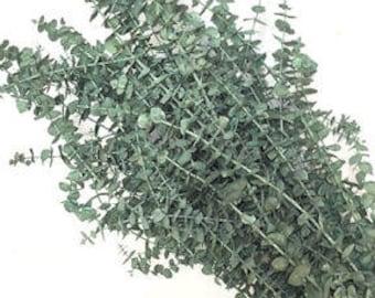 Preserved Sage Eucalyptus | Dried Eucalyptus | Pastel Eucalyptus | Green Eucalytpus