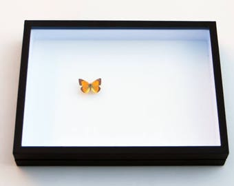 Insect box - 30x40cm black - to store your butterflies and insects.