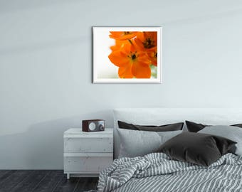 16x20 Macro Orange Flower Fine Art Print