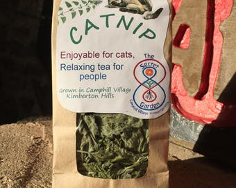 Catnip Herbal Tea