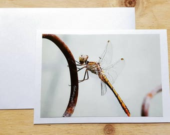 6 x 4 inches Handmade Card and envelope Photo Greeting art Cards Dragonfly anniversary occasion blank