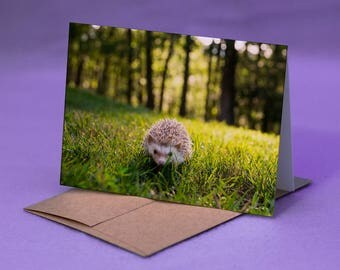 HEDGEHOG PHOTO CARD - Hedgehog Forest Photo Blank Greeting Card - Blank Note Card with Hedgehog - Hedgehog Forest Blank Greeting Card