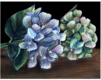 Blue and Green Hydrangea Pastel Drawing Print