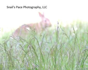 Mystical Grassland