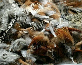 Wholesale lot of 100 genuine mixed Rooster feathers