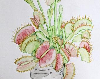 Venus fly trap plant, Original painting/drawing