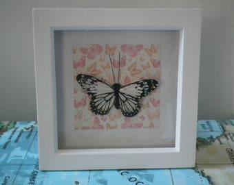 Butterfly Box Frames