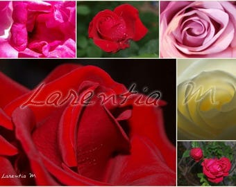 Photo 30X40cm jumble of red, white and Pink Roses
