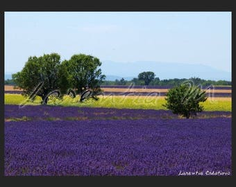Photo 30X40cm Lavender fields and rapeseed on Valensole tray