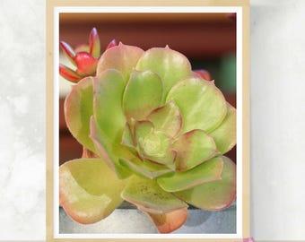 Succulent Photo | Botanical Print | Cactus Artwork | Nature Photography | Garden Nursery Decor | Newlywed Gift | Minimalist Home Decor