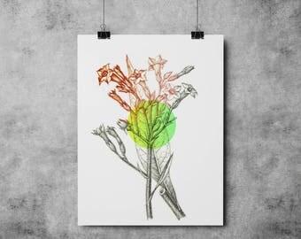 Botanic Illustration 002