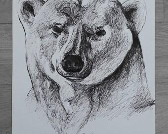 Polar bear Rotring (Indian ink pencil)