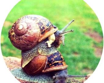 Snails - cute , photography , digital prints