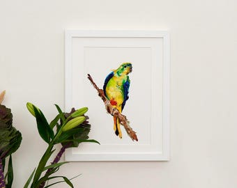 Orange Bellied Parrot Illustration