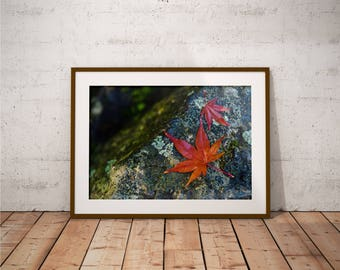 Metal Print - Leaves On The Stone, Photography - Metalic Aluminum Print, Fine Art, Wall Art, Nature Print, Home Decor, Photography