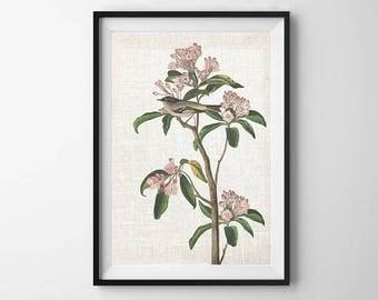 Audubon Bird Print, PRINTABLE ART, Wall Decor, Botanical Print, Bird Art, Vintage Artwork, Poster, Cuvier Print, Nature print, Flower art