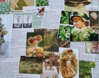OOAK Green Victorian Botanical Paper Ephemera, Collage pack, 68+ pieces paper pack, Paper ephemera lot, junk journal pack, theme paper lot