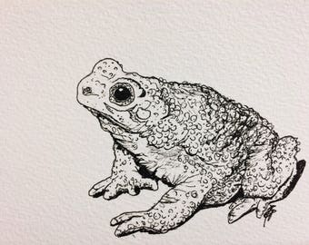 Original art- nature illustration of toad on postcard- gift ideas for animal lovers