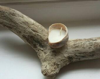 Bougie coquillage sur bois flotté