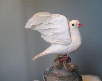 Nice vintage pigeons