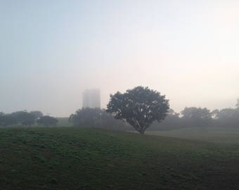 Sydney Park Morning Mist in Winter