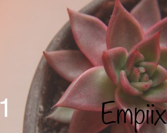 Succulents by Empiix