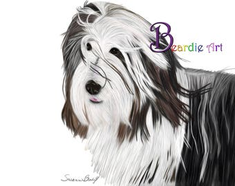 Hand-drawn Bearded Collie greeting card, hair blowing in the wind, white background.