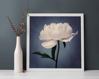 Peony Print, Flower Print, Peony Art, Flower Wall Art, Spring Art, Spring Flower Photography, Peony Flower Art Print, Still Life