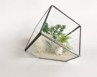 Geometric Terrarium Air Plant // Terrarium - Tillandsia - Airplant - Reindeer Moss - Air Plant Holder - Airplant Air Plants - Driftwood Love